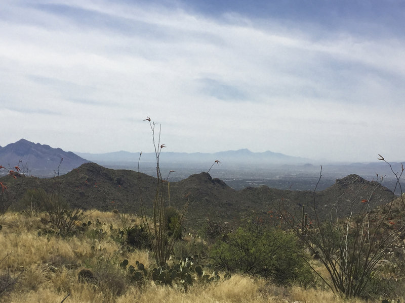 Looking towards downtown Tucson from up on the Ridgeline Trail.