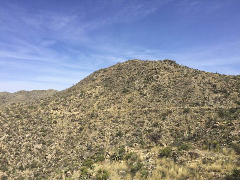 Peering back towards the north at the Wild Burro Loop Trail carved out of the hillside.