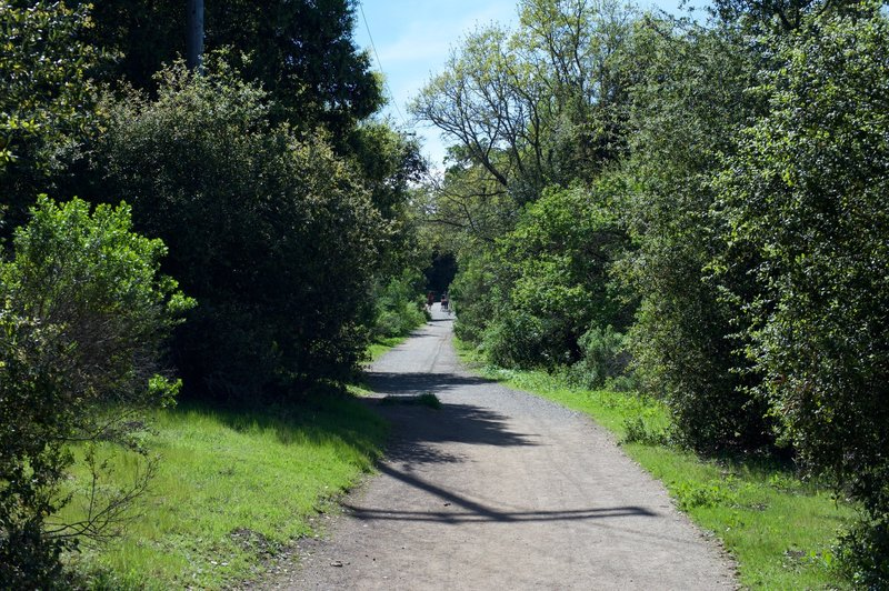 The trail as it makes its way through the preserve.