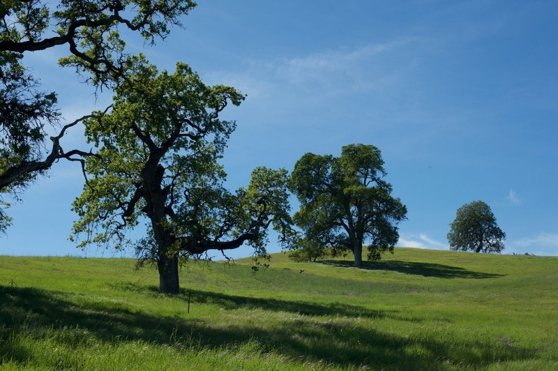 Trees on the hills.