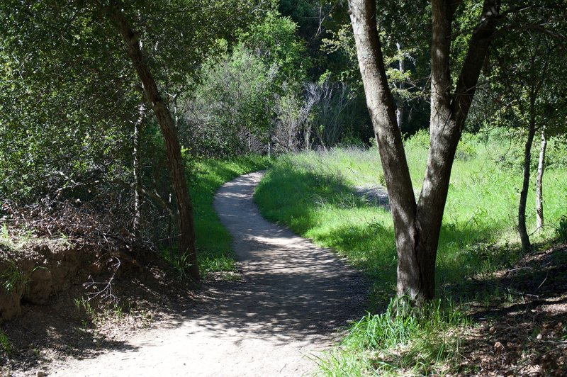 The trail breaks off to the right and narrows to a dirt track as it makes its way into the woods. The trail drops into the woods and exits close to Caballo Lane.