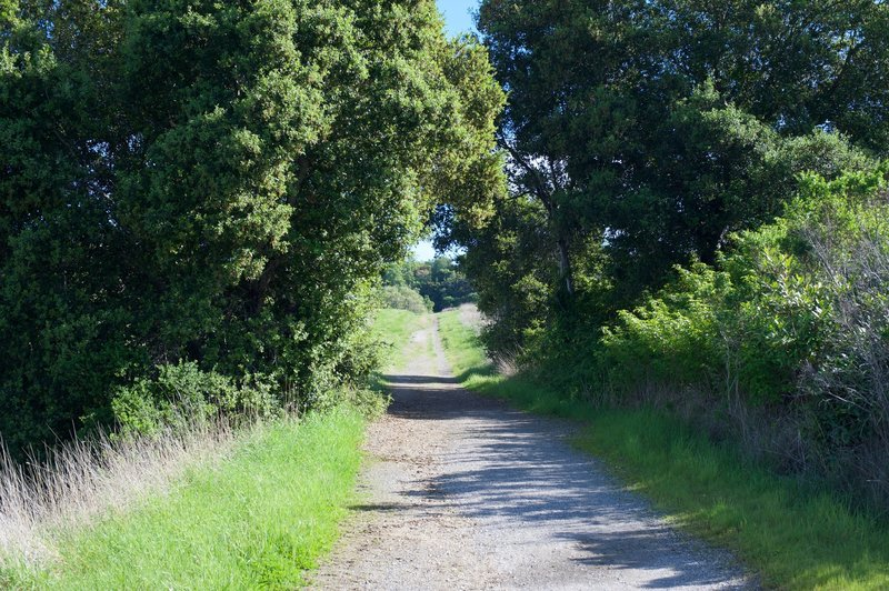 The Meadowlark Trail alternates between dirt and gravel as it works its way through the preserve.