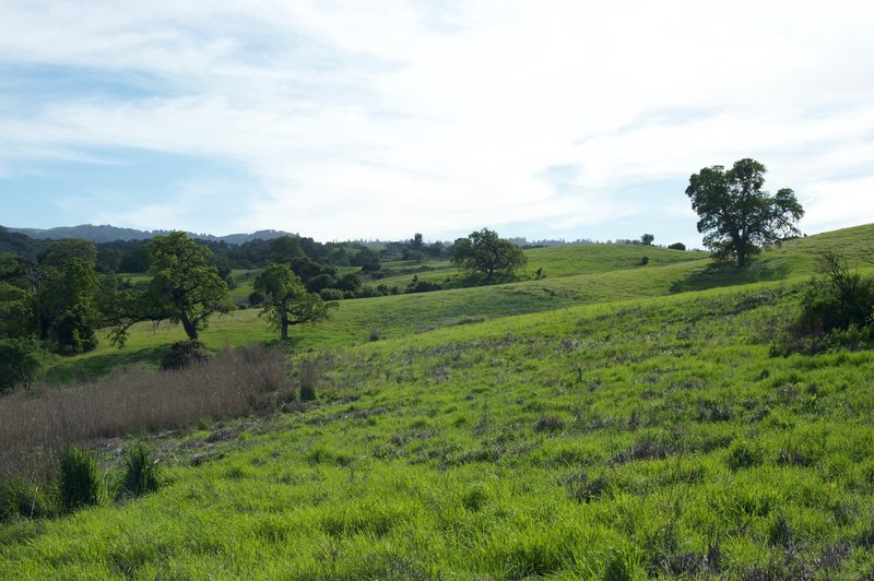 Winter rains make the grass green in the winter and spring, bringing new life to the area.