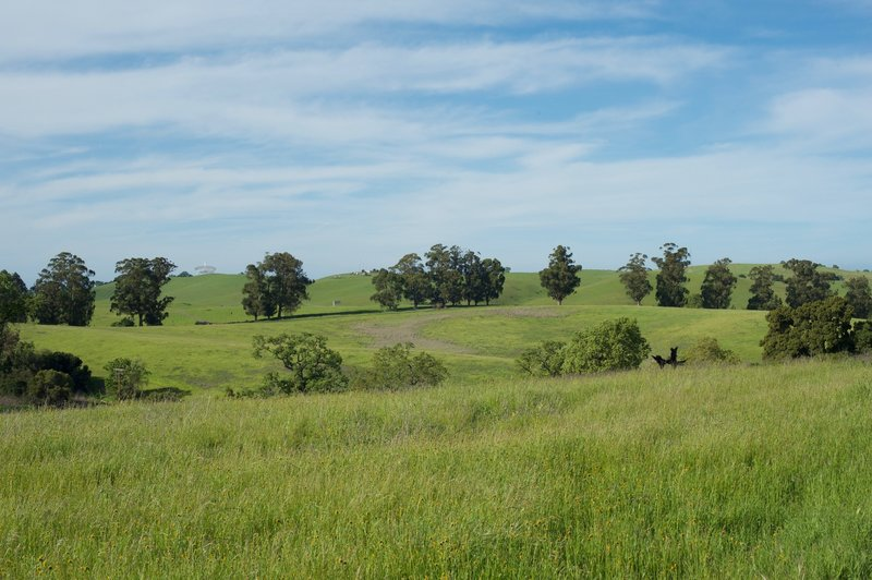The Stanford Dish can be seen in the distance as wildflowers bloom in the fields.