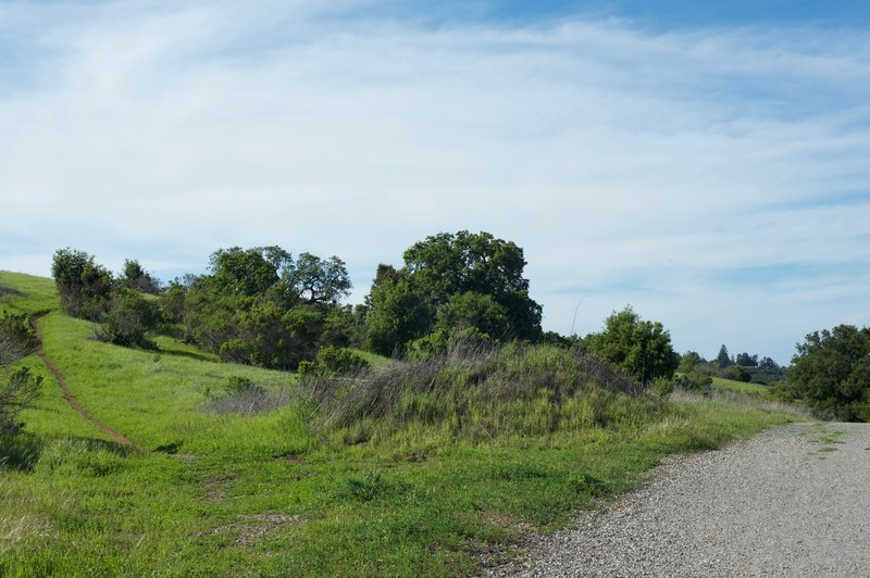 A side trail leads up to the Bowl Loop Trails that run along the hilltop.