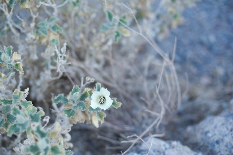 While there aren't a great deal of flowers in the canyon, some can be spotted at various points along the trail.