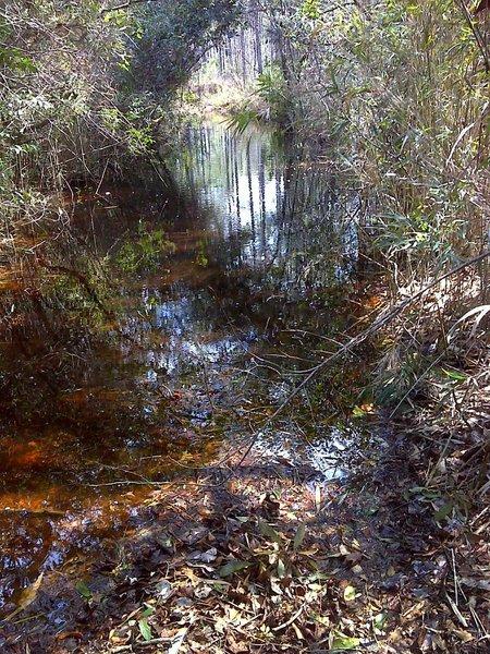 Hardwood wetlands along a blackwater stream on MST Segment 16B. Photo by PJ Wetzel, www.pjwetzel.com.