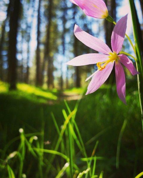 Enjoying the sunshine and wildflowers.