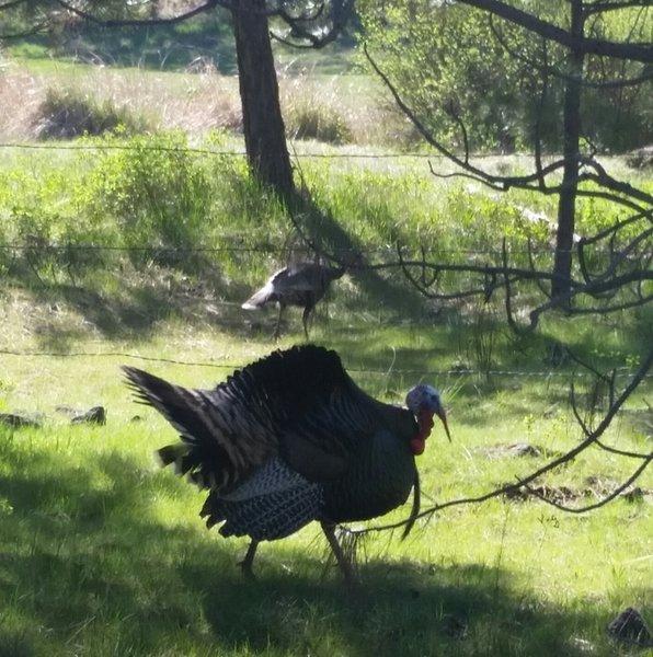 Springtime courtship.