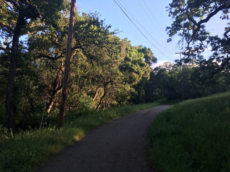 The Arastradero Creek Trail departs from Arastradero Lake and starts climbing up one of the hills.