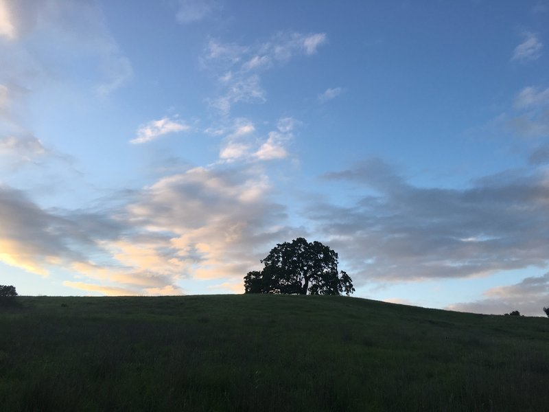 The trees that line the hills make for great photo opportunities in the preserve. The trail winds through the preserve at the base of a majority of the hills.