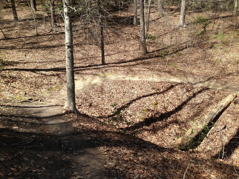 A winding section of Lookout Tower Trail.