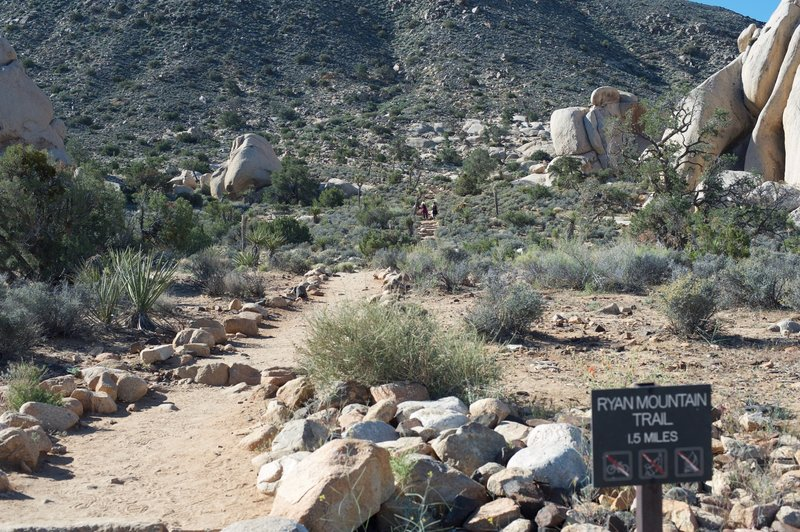 Ryan Mountain Trail as it leaves the parking lot as it split two giant rock formations.