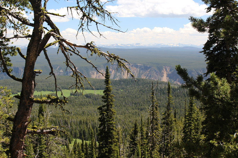View of the Grand Canyon of the Yellowstone from the Mount Washburn Trail.