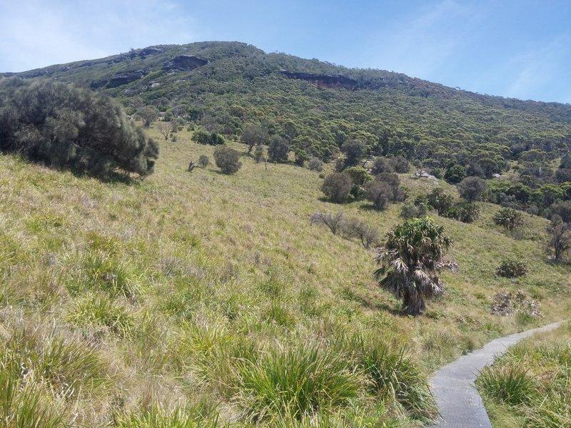 The hillside along the Coast Track.