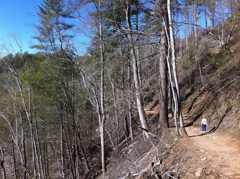 Abrams Creek Trail.