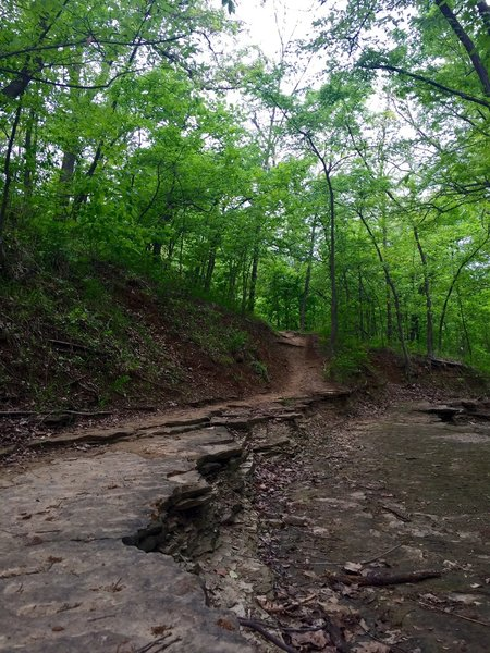 The Yellow and Pink Trail at Turkey Mountain.