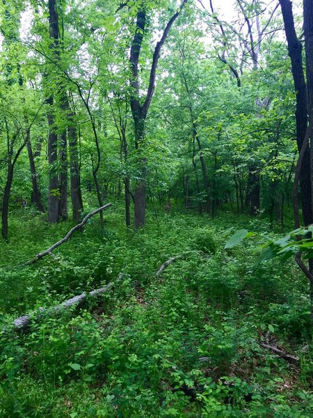A snapshot from Turkey Mountain Park. There is a doe in the trees if you look close.