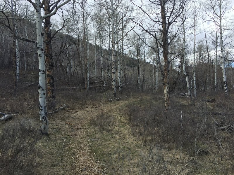 Beginning of the trail.
