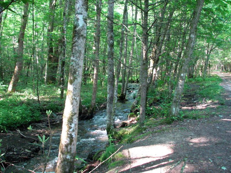 Trail along the Rough Fork.