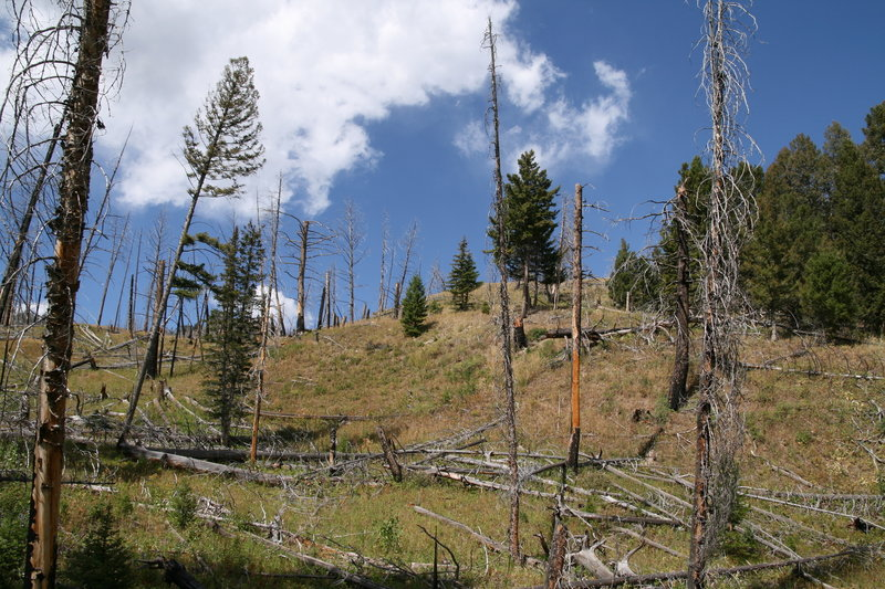 Yellowstone wildfire scars.