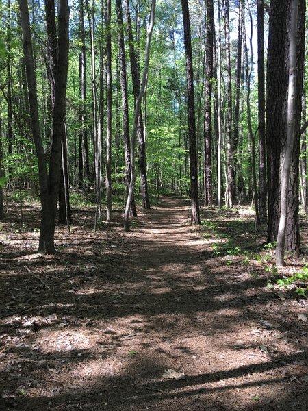Oak Rock Trail starting point.
