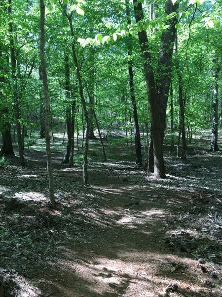 Spring is showing it's green at Oak Rock Trail. Easy trail on a dry day.