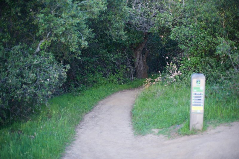 The trail as it emerges from the woods and it meets the Franciscan Trail.