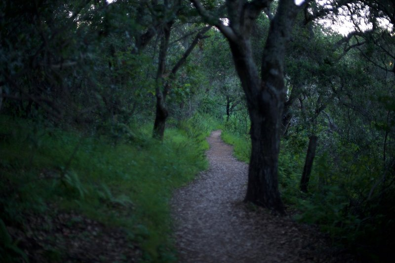 The trail as it ascends through the woods. It is well shaded, offering a reprieve from the sun.