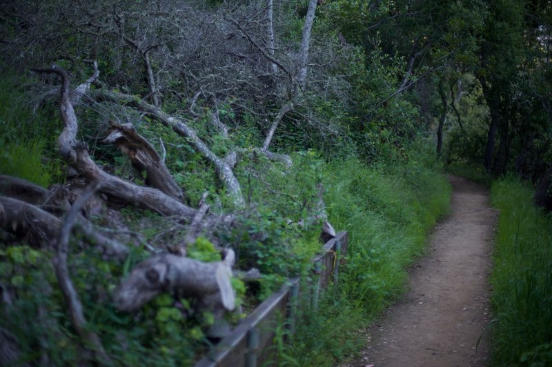 Because it is a natural preserve, trees are not removed when they fall across the trail.  Here, a fallen tree lies between 2 switchbacks.