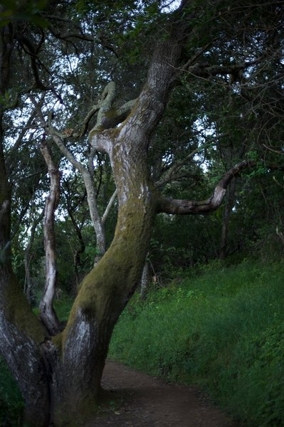 Trees in the woods are covered in moss, making it great for those who want to explore the plant life in the preserve.