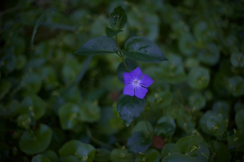 While there aren't as many flowers along the trail as other areas in the park, they can still be found here and there.