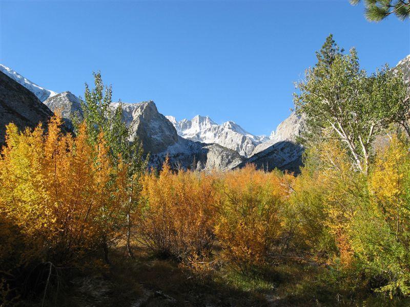 Norman Clyde Peak over autumn woods