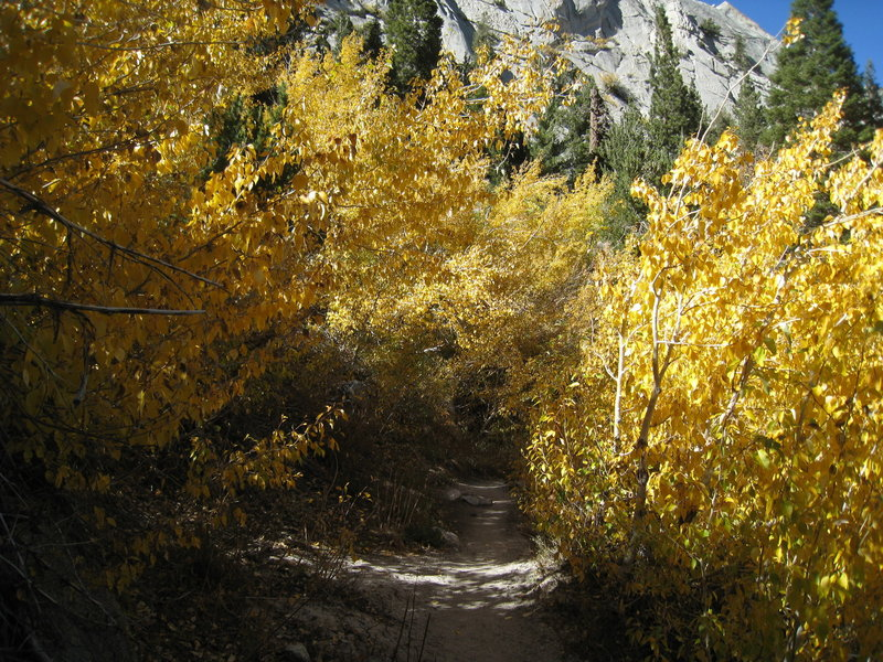 Fall foliage on the Mt. Whitney Trail.