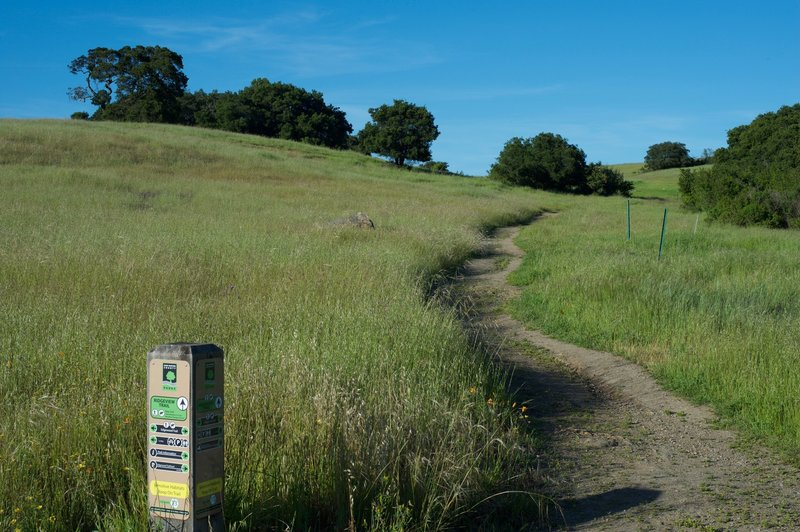 The Ridgeview Trail as it leaves the Edgewood Trail.  It is a single dirt track as it begins to climb to the hilltop.