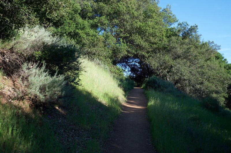 The trail climbs up the hillside.  Views are obscured by trees and shrubs at various points along the way.