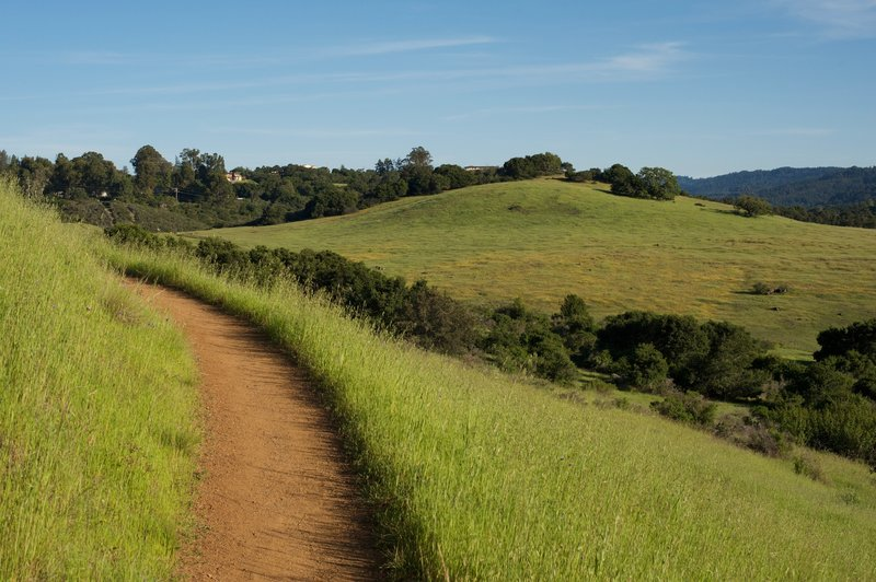 The trail hugs the hillside, as views of the fields below the trail spread out before you.  You can see the yellow flowers blooming in the spring in the distant fields.  Deer have been seen feeding in these fields.