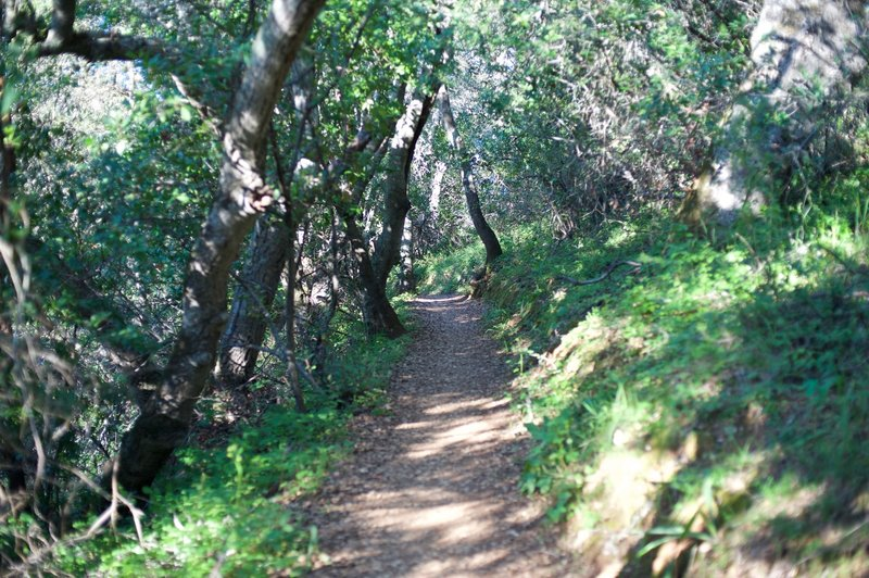 The Franciscan Trail as it drops towards the Ridgeview Trail.