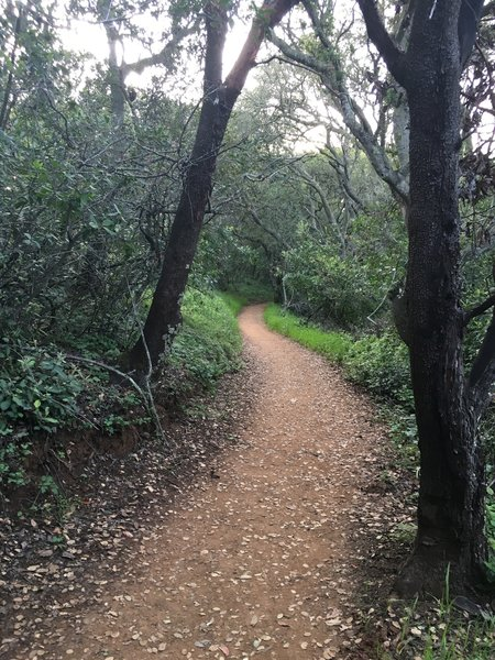 The trail is a narrow dirt track, but nice for running.