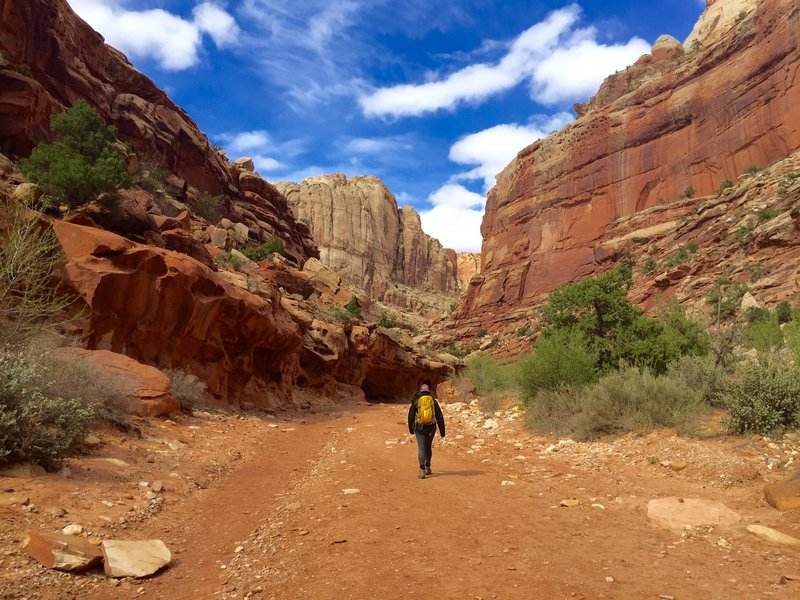 Post hike to Strike Valley Overlook. Hiking back through the canyon wash access road to the vehicle.