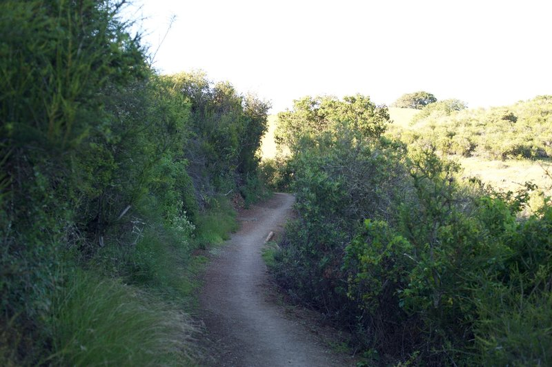 The trail changes from grassland to shrubs in the upper parts of the trail.