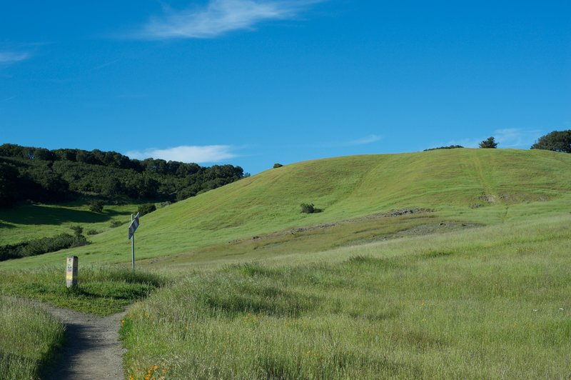 A small connector goes off to the left while views of the surrounding hills come into view.  The views are great, and fields full of wildflowers in the spring.