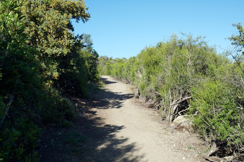 The trail works its way through shrubs at the end of the trail.  It also transforms from a dirt track to more gravel and rock.