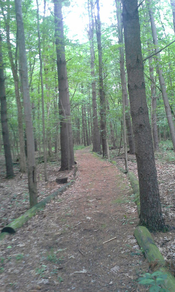 One of the smoother sections of the trail.