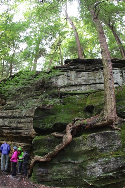 Enjoying the sandstone formations visible from the Ledges Trail