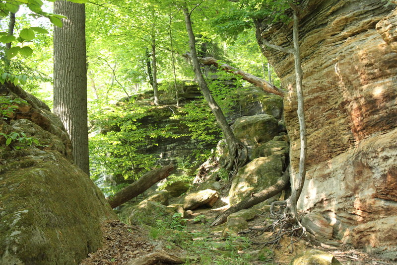Cuyahoga Valley: Ledges Trails