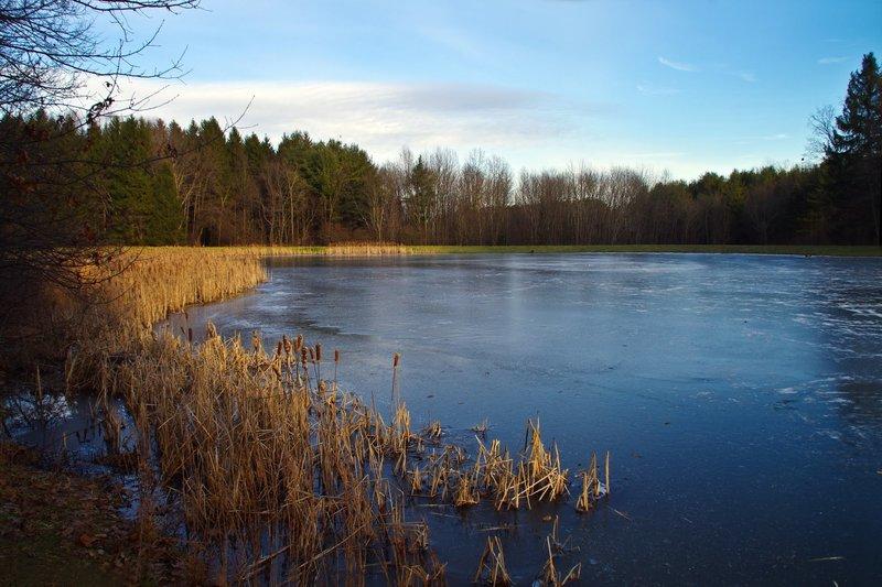 Horseshoe Pond with permission from Rumiana Koynova-Tenchova