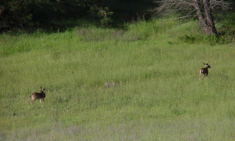 Deer on the hillside.