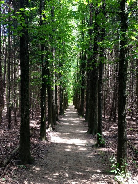 Corridors of towering trees are the best part about these trails.