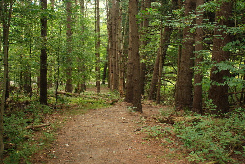 Towering trees line almost every step of this trail. Photo by NPS/DJ Reiser